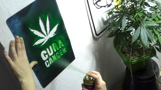 Instituto americano do Câncer finalmente admite que maconha pode acabar com câncer