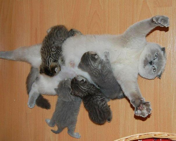 Populares 20 fotos de gatas com seus filhotes para alegrar o seu dia QL23