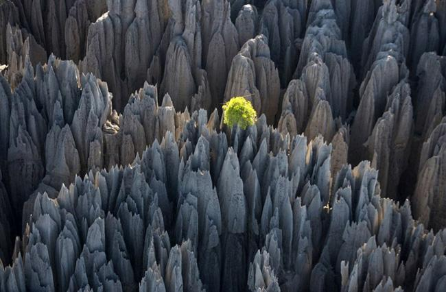 Tsingy de Bemaraha_the stone forest of Madagascar
