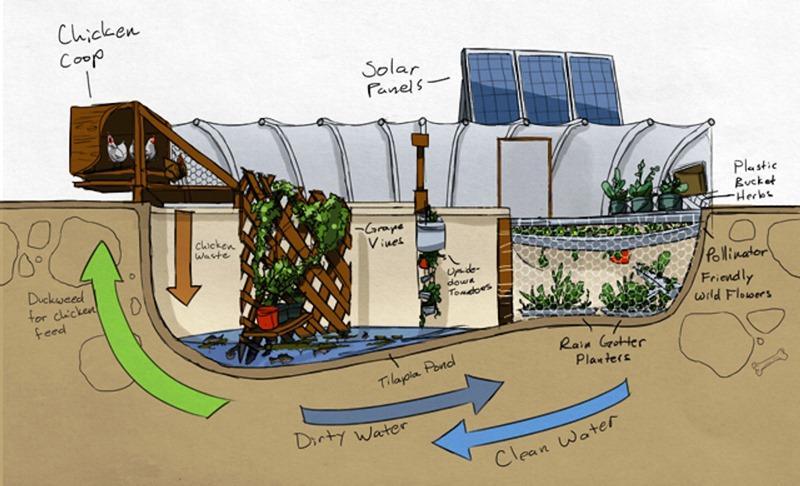 aprenda-cultivar-alimentos-dentro-piscina-garden-pool