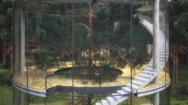 awebic-casa-na-árvore6