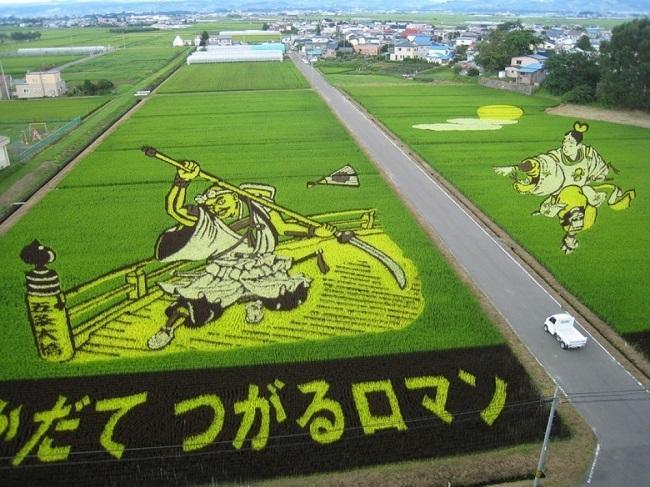 campos de arroz 10
