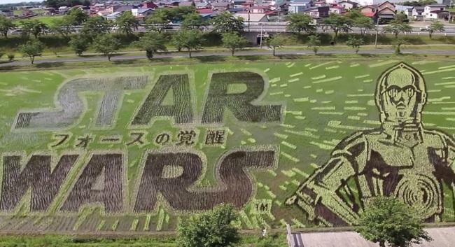 campos de arroz 11