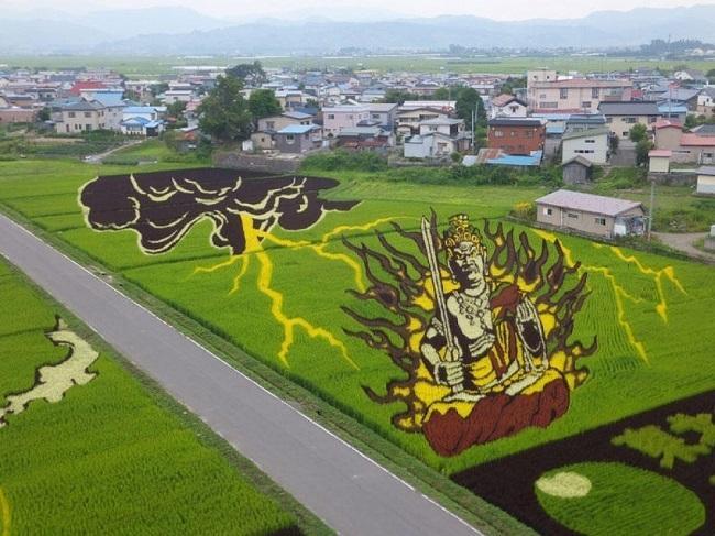 campos de arroz 12