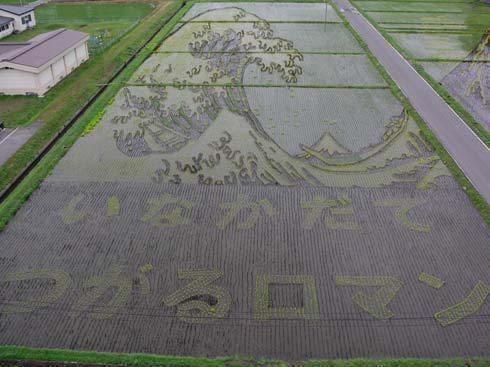 campos de arroz 3