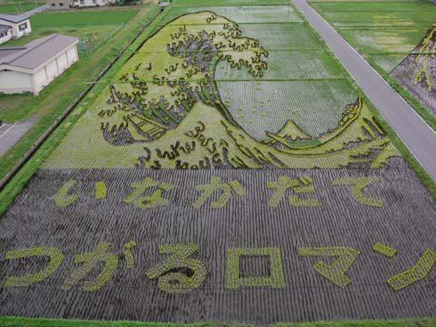 campos de arroz 4