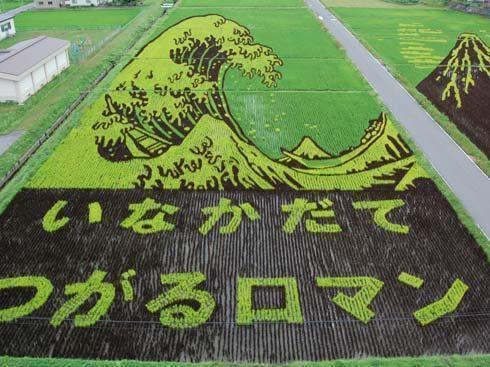 campos de arroz 5