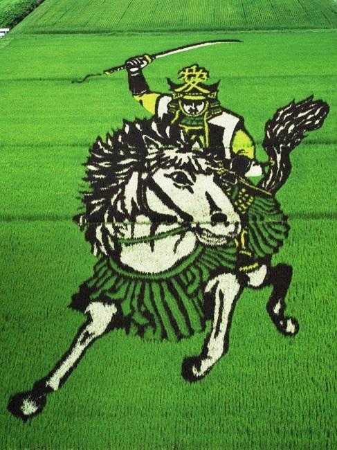 campos de arroz 6