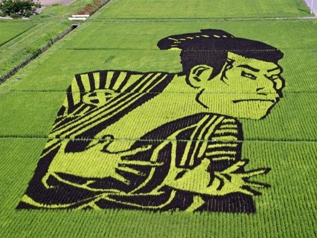 campos de arroz 7
