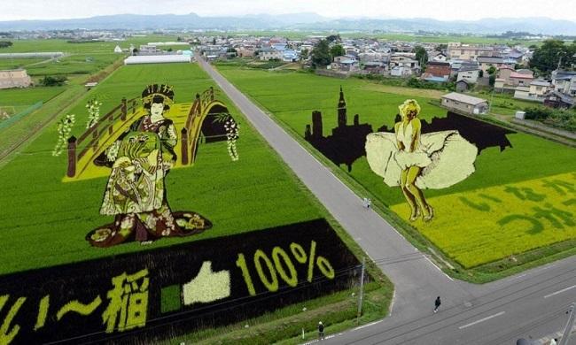 campos de arroz 8