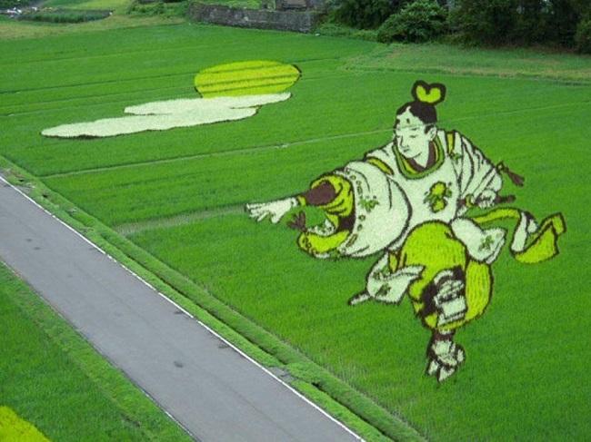 campos de arroz 9