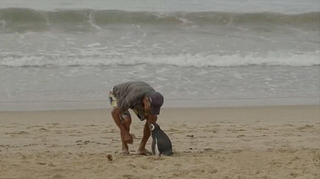 man-saves-penguin-returns-swims-5000-miles-17