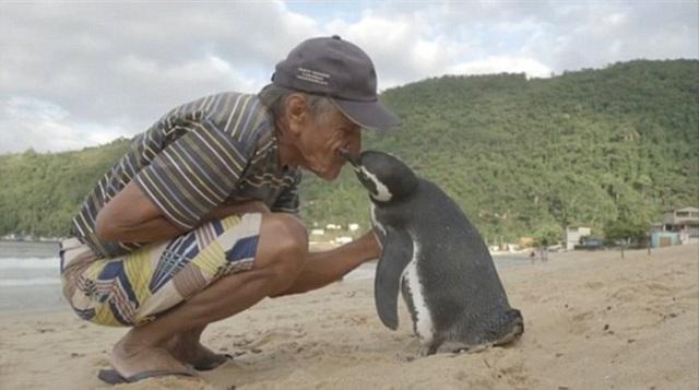 man-saves-penguin-returns-swims-5000-miles-18
