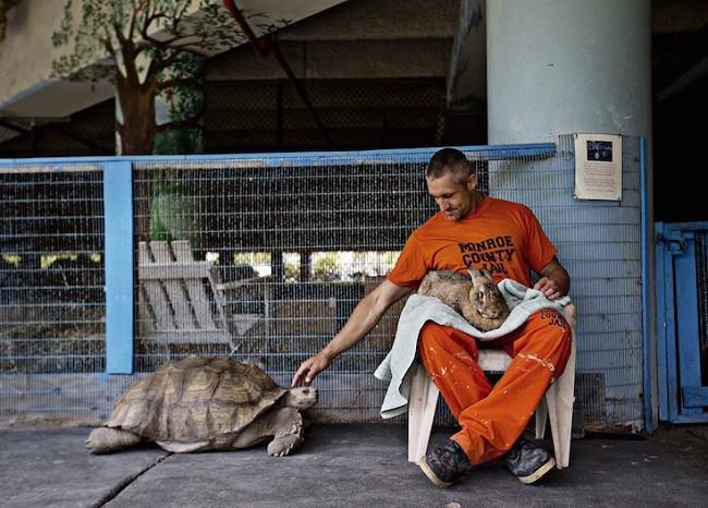 prisioneiros animais abandonados 10