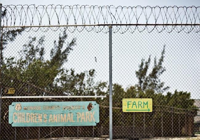 prisioneiros animais abandonados 12