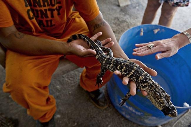 prisioneiros animais abandonados 8