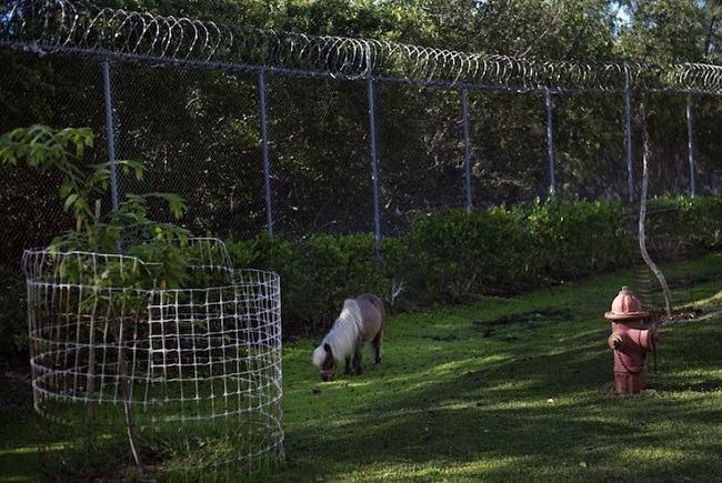prisioneiros animais abandonados 9