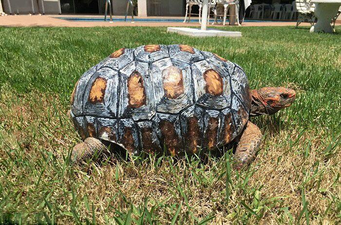 Tartaruga Freddy com casco 3D