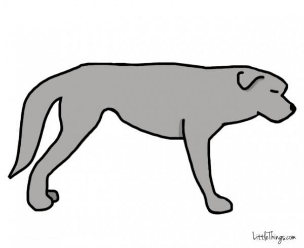 awebic-linguagem-dos-cães-6