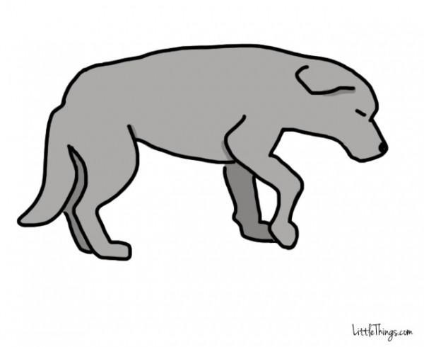 awebic-linguagem-dos-cães-9