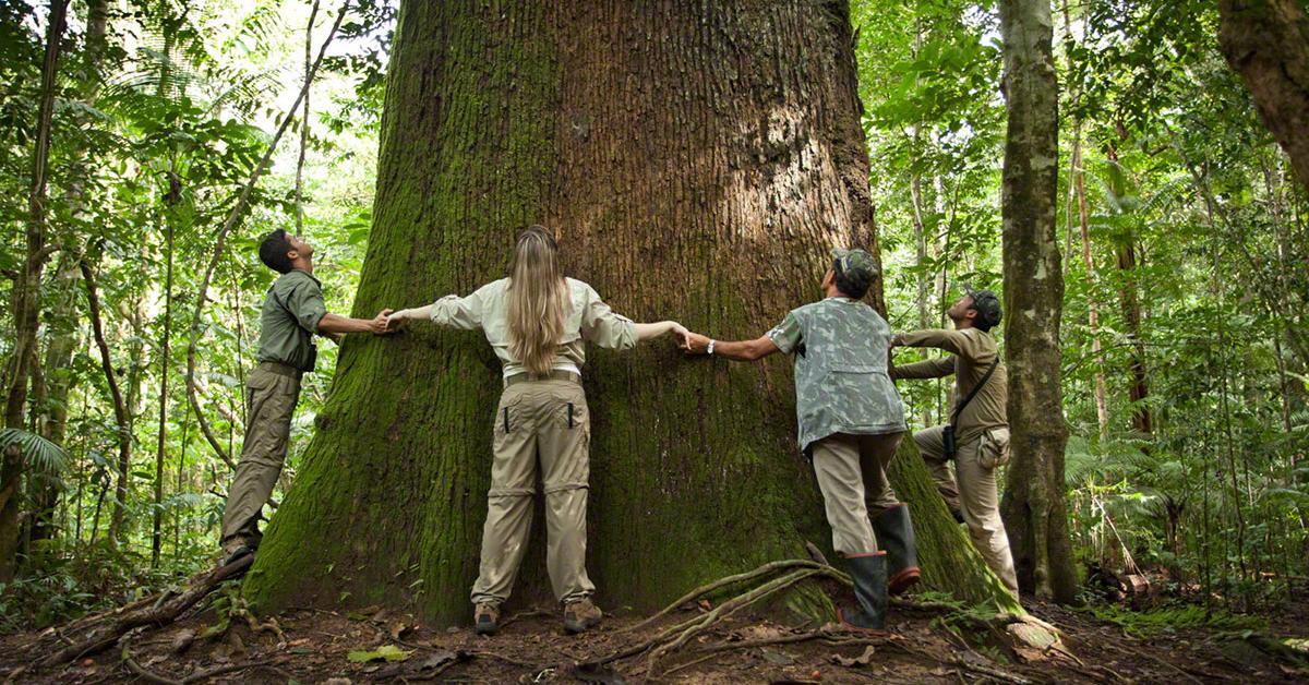 Resultado de imagem para noruega florestas