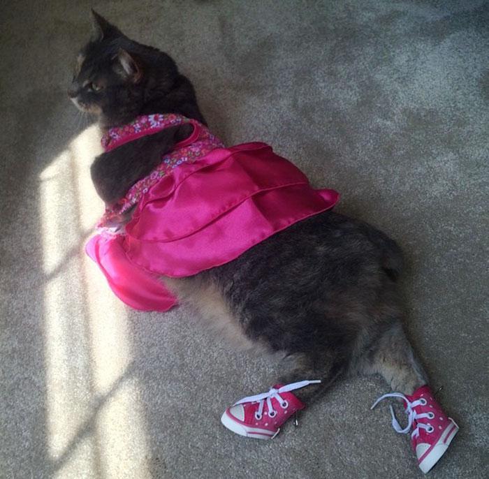 guy-takes-cat-prom-ruby-sam-steingard-8