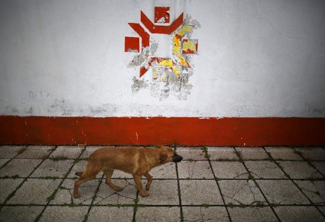 a-dog-walks-past-the-kosevo-stadium-where-the-opening-ceremonies-were-held (640x437)