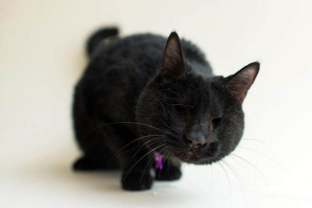 Ember Darkmoon foi levado ao Milo's depois que um resgatador não conseguiu encontrar um lar para ele.