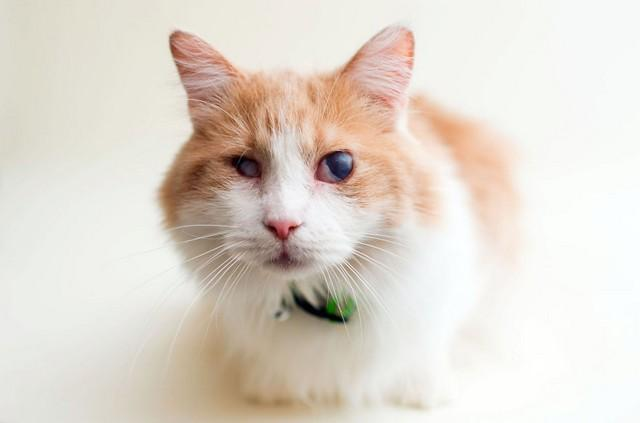 Oliver foi resgatado durante as festas de final de ano antes de ser morto. Ele também veio de um acumulador.
