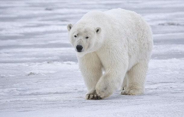 animais mais perigosos do mundo (10)