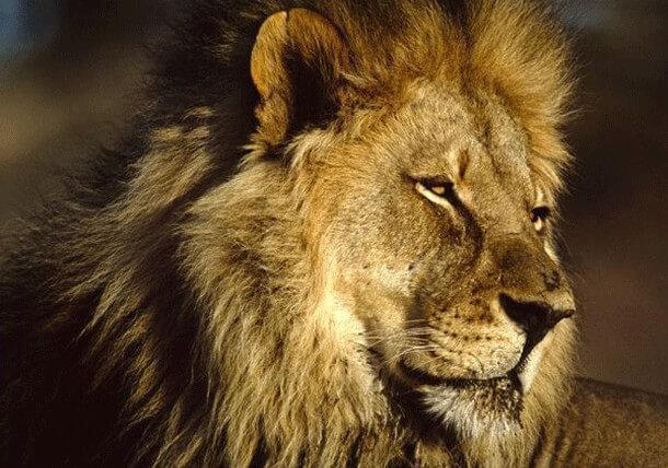animais mais perigosos do mundo (12)