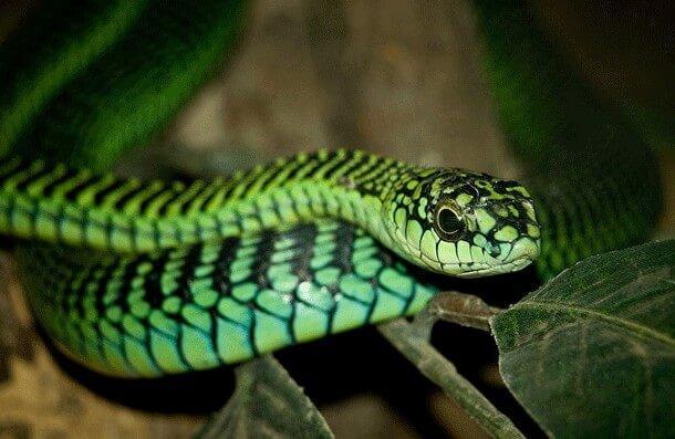 animais mais perigosos do mundo (13)