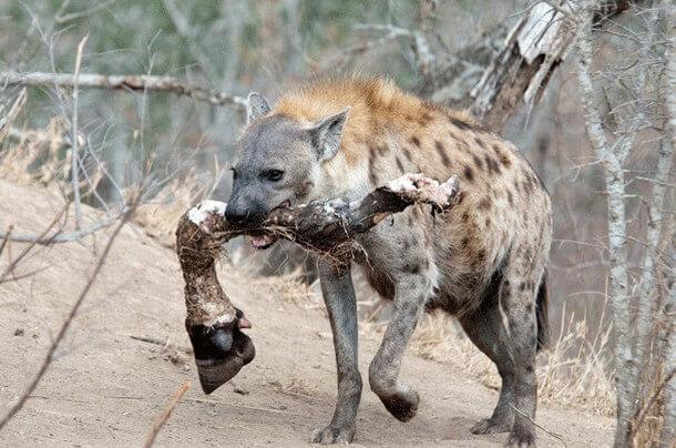 animais mais perigosos do mundo (15)