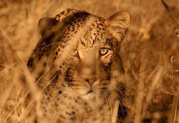 animais mais perigosos do mundo (18)