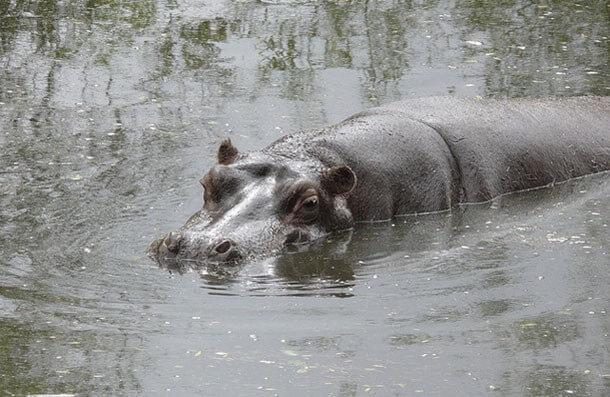 animais mais perigosos do mundo (22)