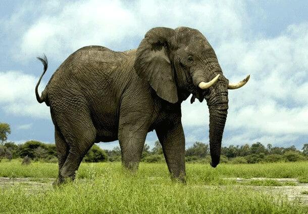 animais mais perigosos do mundo (24)