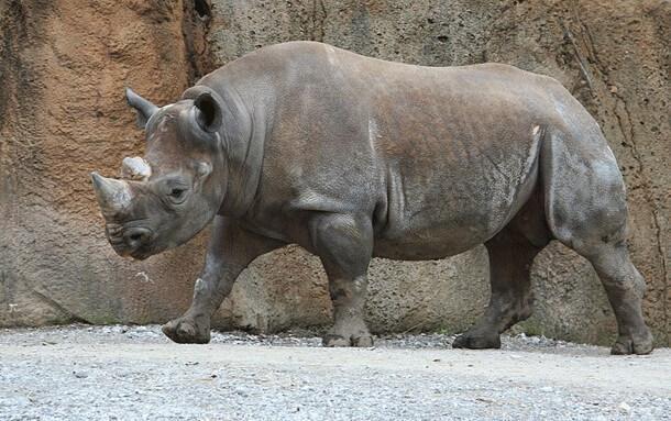 animais mais perigosos do mundo (3)