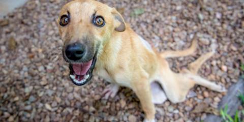 Cachorrinha paraplégica encontra um lar depois de se arrastar por quilômetros