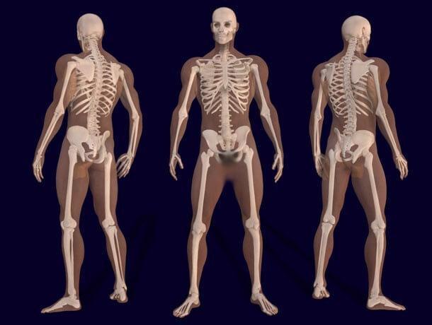 corpo humano (21)