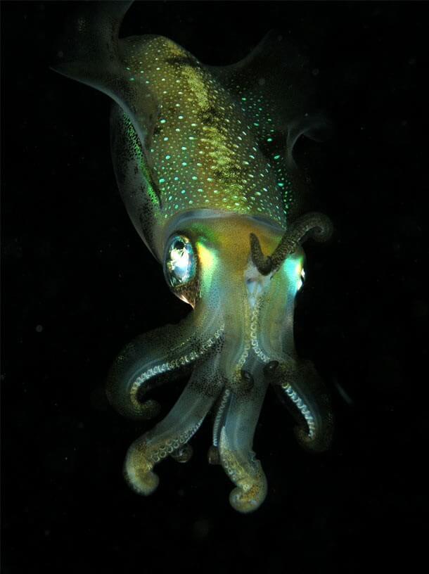 mistérios e estranhezas do fundo do mar (12)
