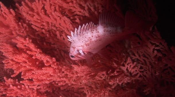 mistérios e estranhezas do fundo do mar (16)