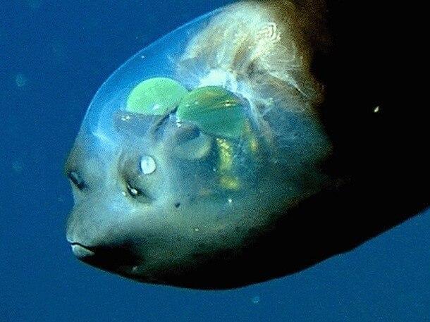 mistérios e estranhezas do fundo do mar (25)