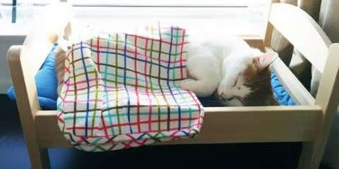 Gatinhos de abrigo dormem em camas de bonecas doadas pela IKEA