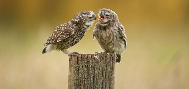 coruja jantar romantico