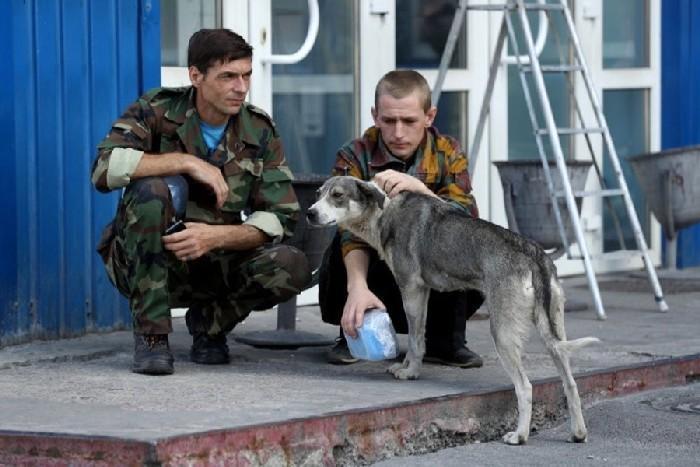 Cãee da cidade de Pripyat em contato com os humanos