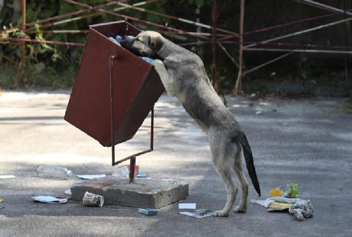 Cachorro procurando por comida no lixo de Pripyat