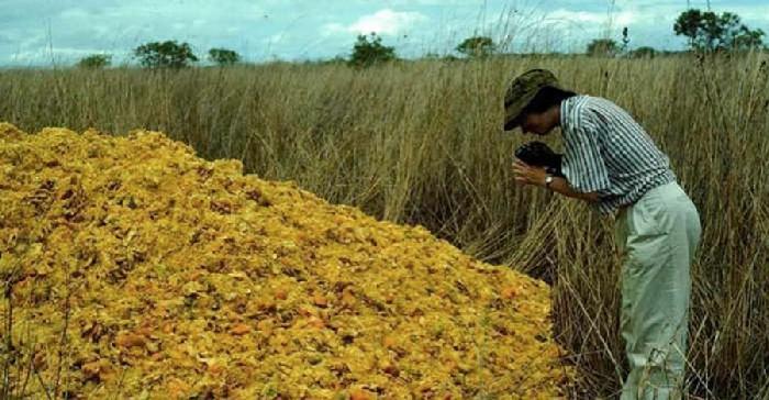 Floresta tropical que se desenvolveu devido à cascas de laranja 5