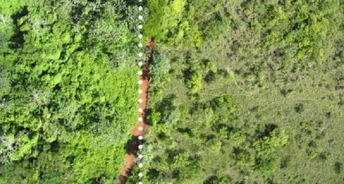 Floresta tropical que se desenvolveu devido à cascas de laranja 4