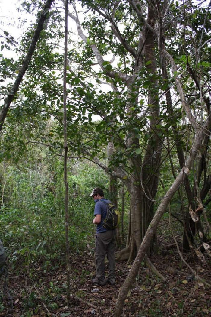 Floresta tropical que se desenvolveu devido à cascas de laranja 3