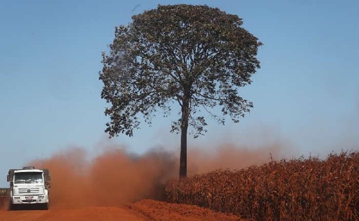 Floresta tropical que se desenvolveu devido à cascas de laranja 2